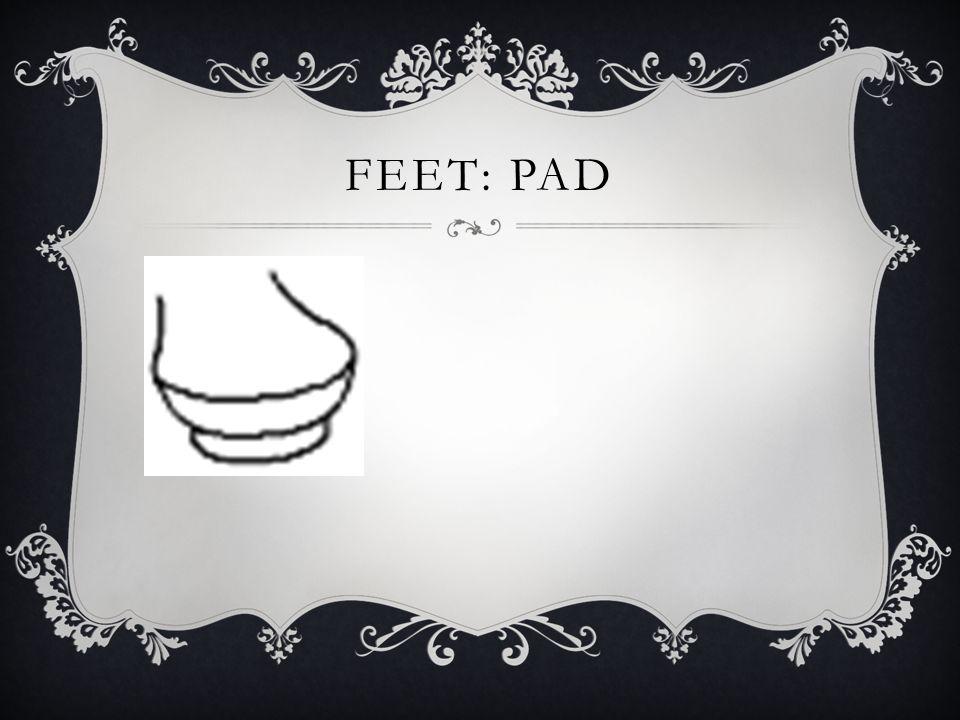 FEET: PAD