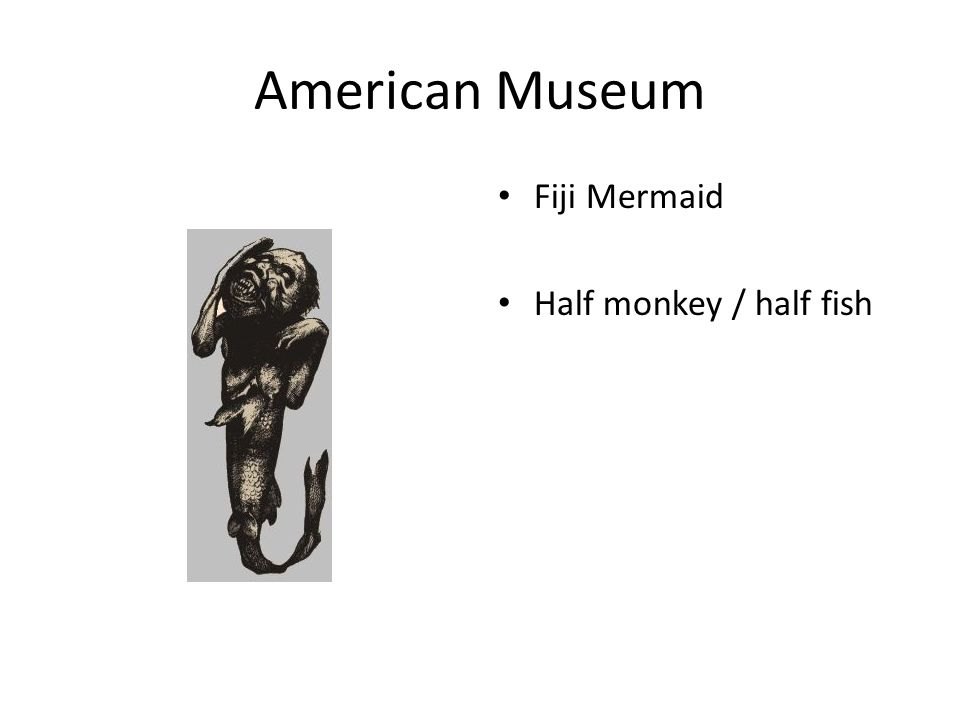 American Museum Fiji Mermaid Half monkey / half fish
