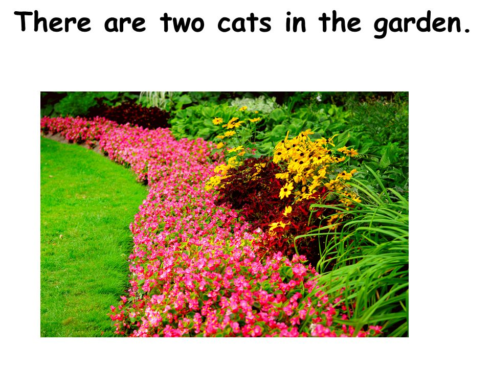 There are two cats in the garden.