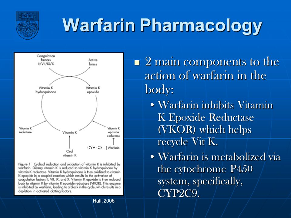Warfarin Pharmacology 2 main components to the action of warfarin in the body: 2 main components to the action of warfarin in the body: Warfarin inhib