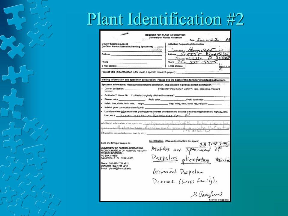 Plant Identification #2