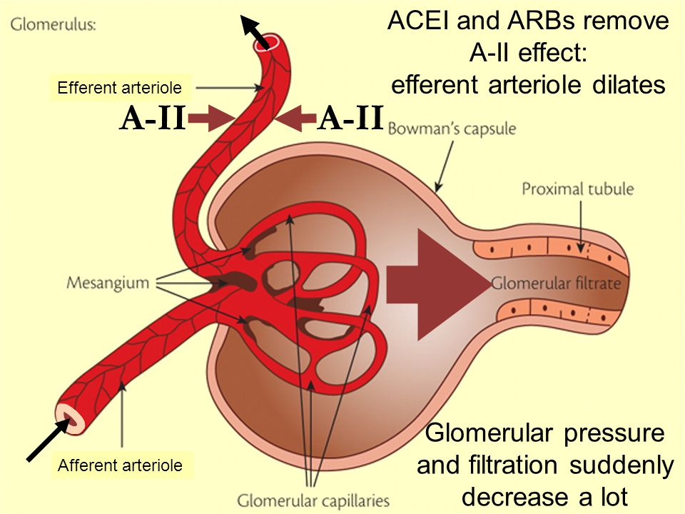 A-II Afferent arteriole Efferent arteriole Glomerular pressure and filtration suddenly decrease a lot ACEI and ARBs remove A-II effect: efferent arter