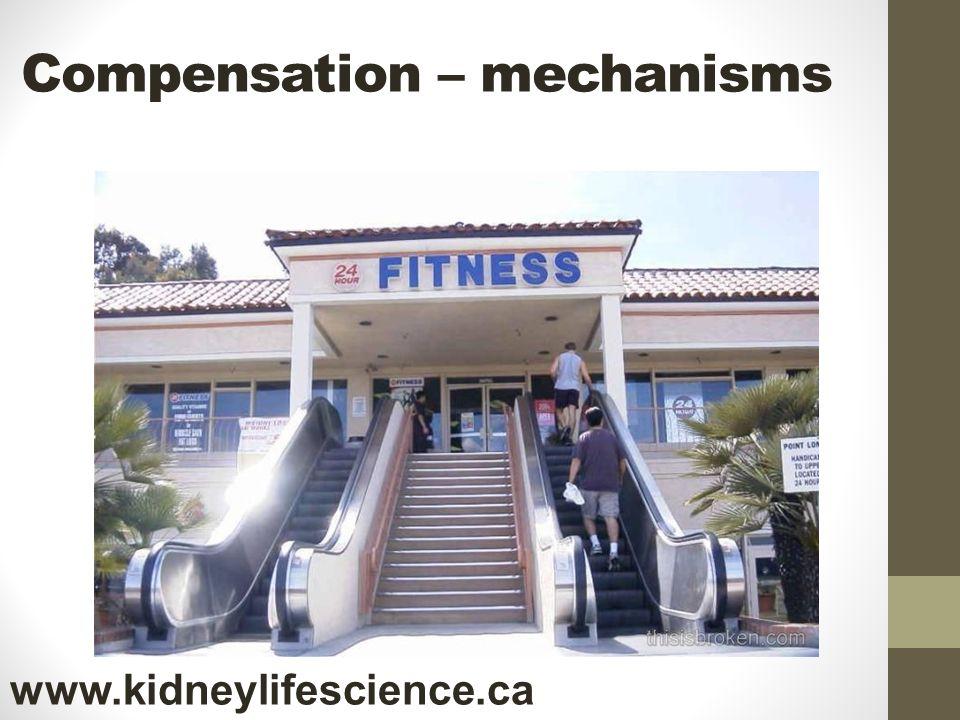 Compensation – mechanisms www.kidneylifescience.ca