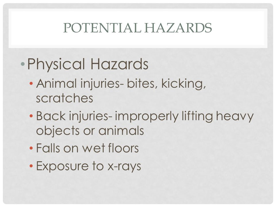 POTENTIAL HAZARDS Physical Hazards Animal injuries- bites, kicking, scratches Back injuries- improperly lifting heavy objects or animals Falls on wet