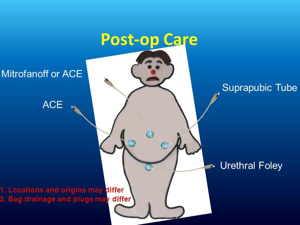 Post-op Care Urethral Foley Mitrofanoff or ACE Suprapubic Tube ACE 1.