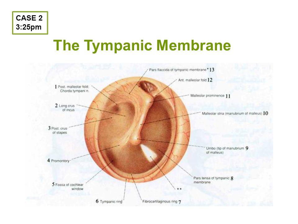 The Tympanic Membrane CASE 2 3:25pm