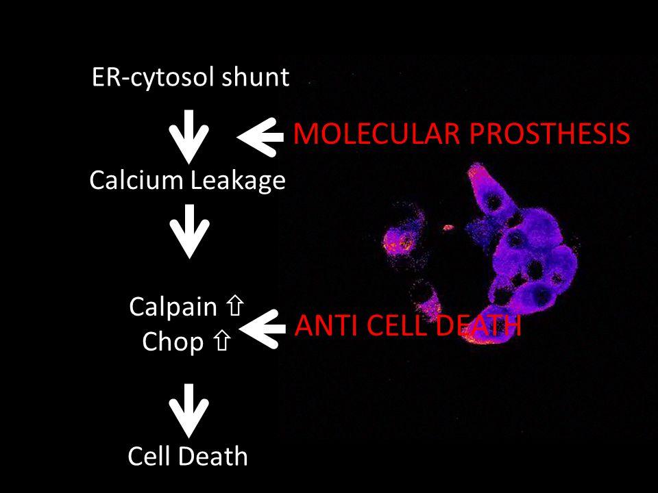 ER-cytosol shunt Calpain Chop Calcium Leakage Cell Death MOLECULAR PROSTHESIS ANTI CELL DEATH