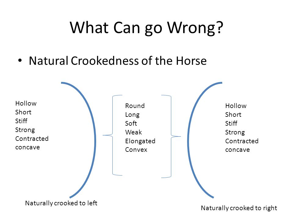 What Can go Wrong? Natural Crookedness of the Horse Hollow Short Stiff Strong Contracted concave Hollow Short Stiff Strong Contracted concave Round Lo