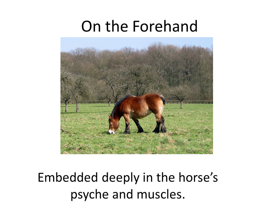 On the Forehand Embedded deeply in the horses psyche and muscles.