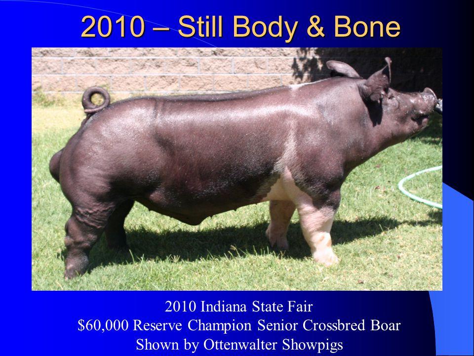 2010 – Still Body & Bone 2010 Indiana State Fair $60,000 Reserve Champion Senior Crossbred Boar Shown by Ottenwalter Showpigs