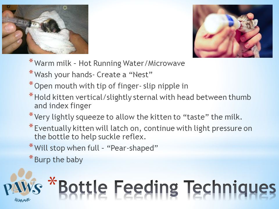 * Warm milk – Hot Running Water/Microwave * Wash your hands- Create a Nest * Open mouth with tip of finger- slip nipple in * Hold kitten vertical/slig