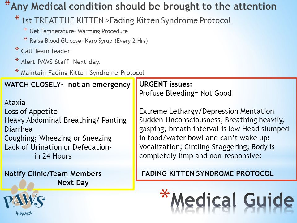 * Any Medical condition should be brought to the attention * 1st TREAT THE KITTEN >Fading Kitten Syndrome Protocol * Get Temperature- Warming Procedur
