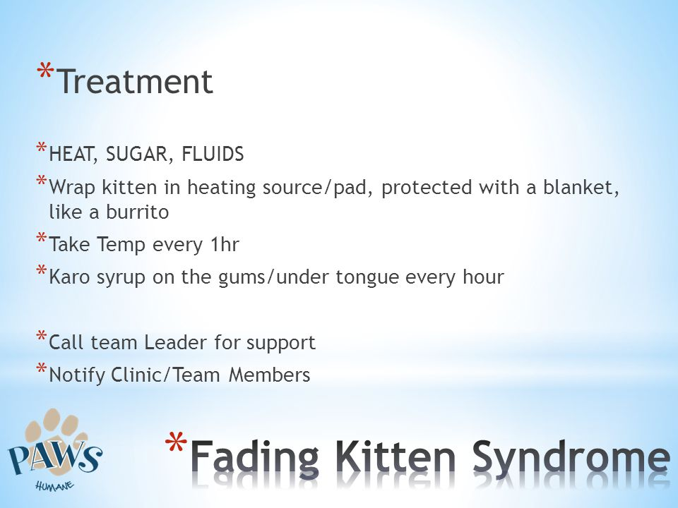 * Treatment * HEAT, SUGAR, FLUIDS * Wrap kitten in heating source/pad, protected with a blanket, like a burrito * Take Temp every 1hr * Karo syrup on