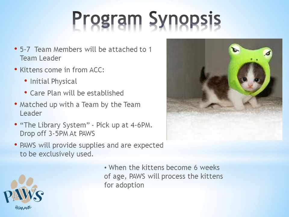 5-7 Team Members will be attached to 1 Team Leader Kittens come in from ACC: Initial Physical Care Plan will be established Matched up with a Team by