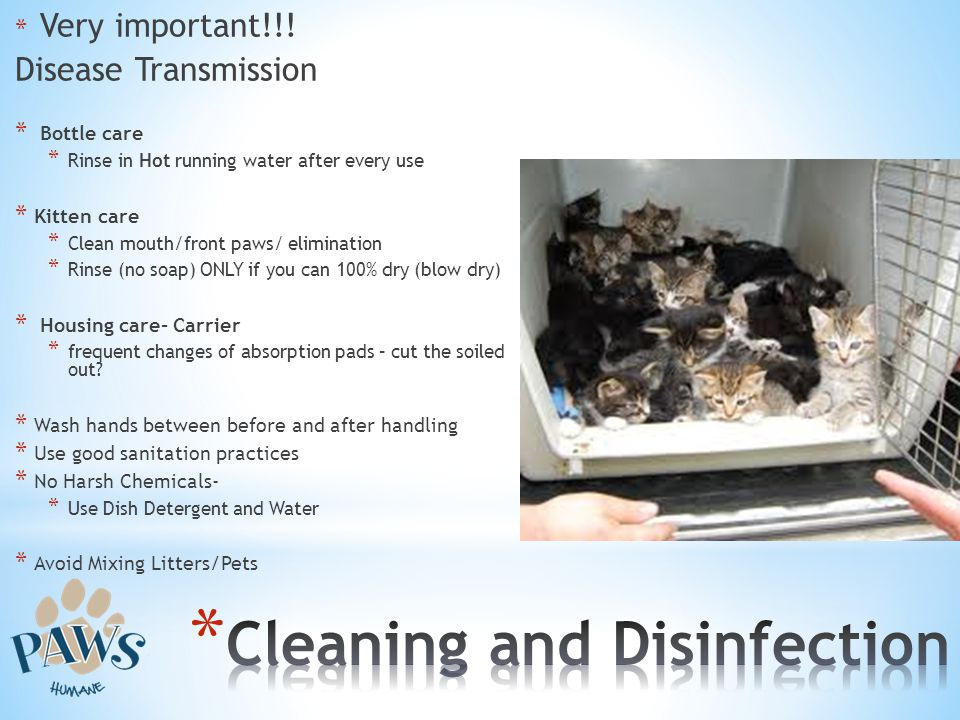 * Very important!!! Disease Transmission * Bottle care * Rinse in Hot running water after every use * Kitten care * Clean mouth/front paws/ eliminatio