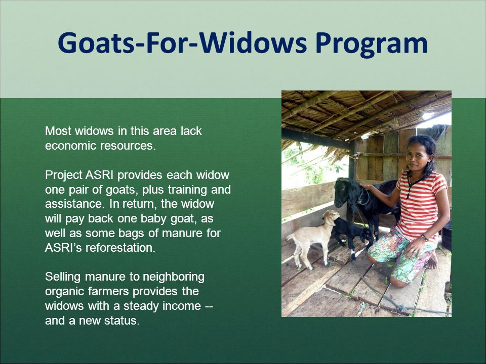 Goats-For-Widows Program Most widows in this area lack economic resources. Project ASRI provides each widow one pair of goats, plus training and assis