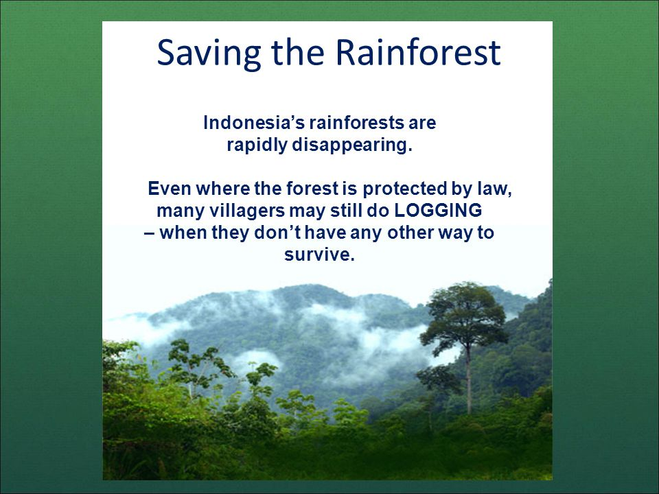 Saving the Rainforest Indonesias rainforests are rapidly disappearing.