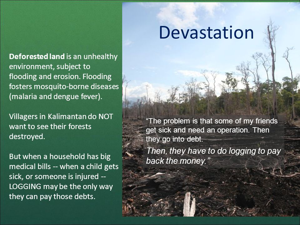 Deforested land is an unhealthy environment, subject to flooding and erosion.