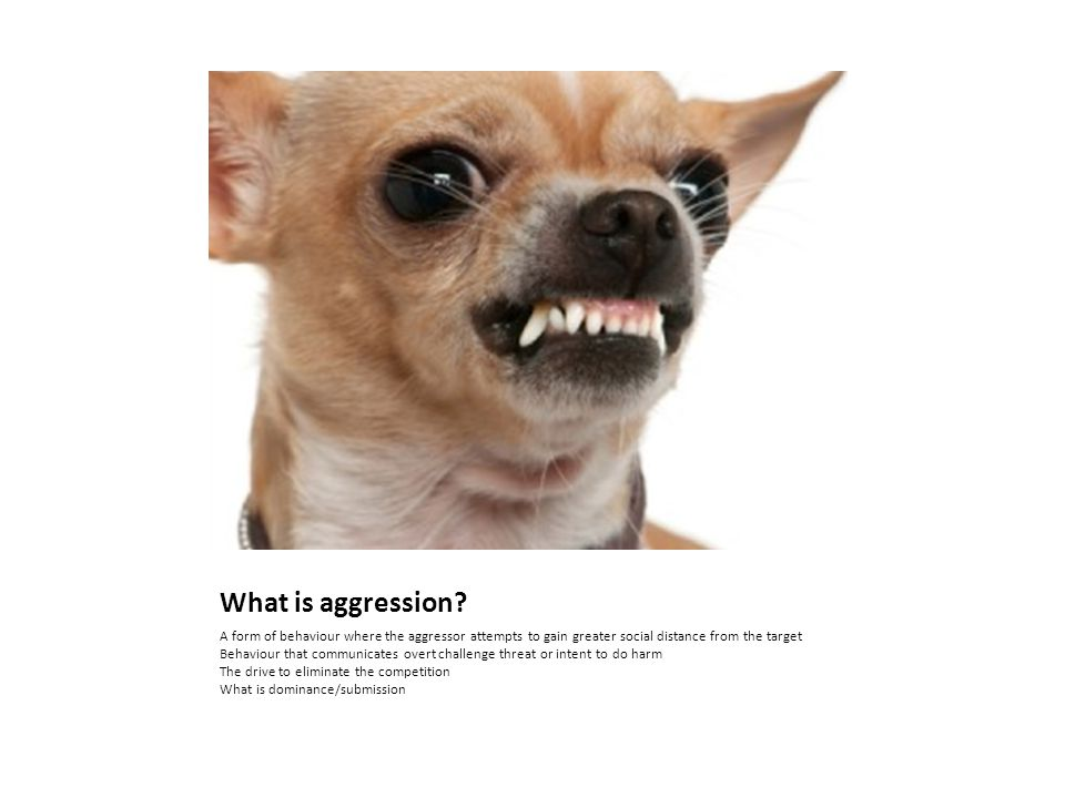 What is aggression.