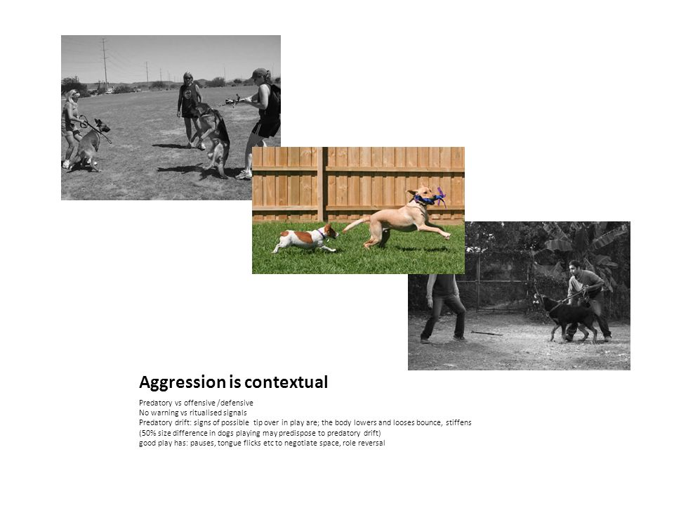Aggression is contextual Predatory vs offensive /defensive No warning vs ritualised signals Predatory drift: signs of possible tip over in play are; the body lowers and looses bounce, stiffens (50% size difference in dogs playing may predispose to predatory drift) good play has: pauses, tongue flicks etc to negotiate space, role reversal