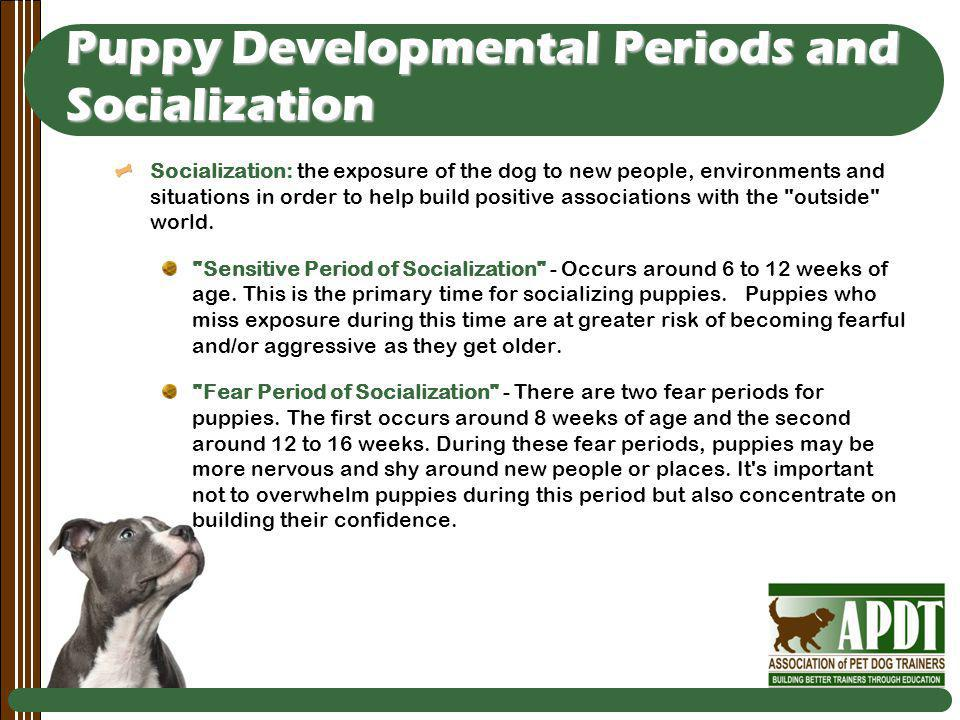Puppy Developmental Periods and Socialization Socialization: the exposure of the dog to new people, environments and situations in order to help build positive associations with the outside world.