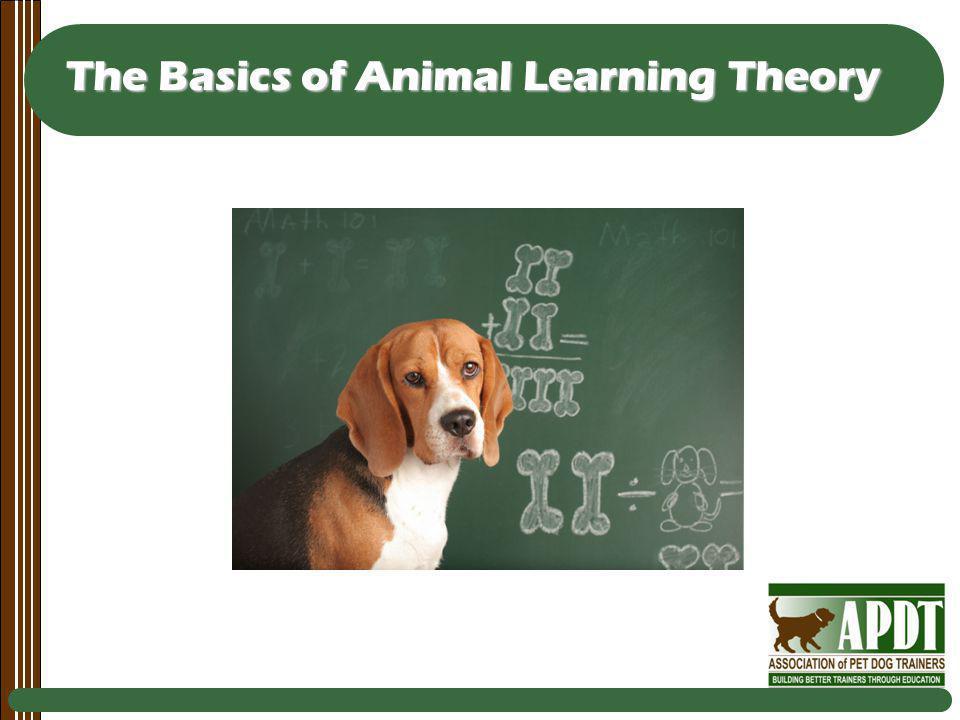 The Basics of Animal Learning Theory