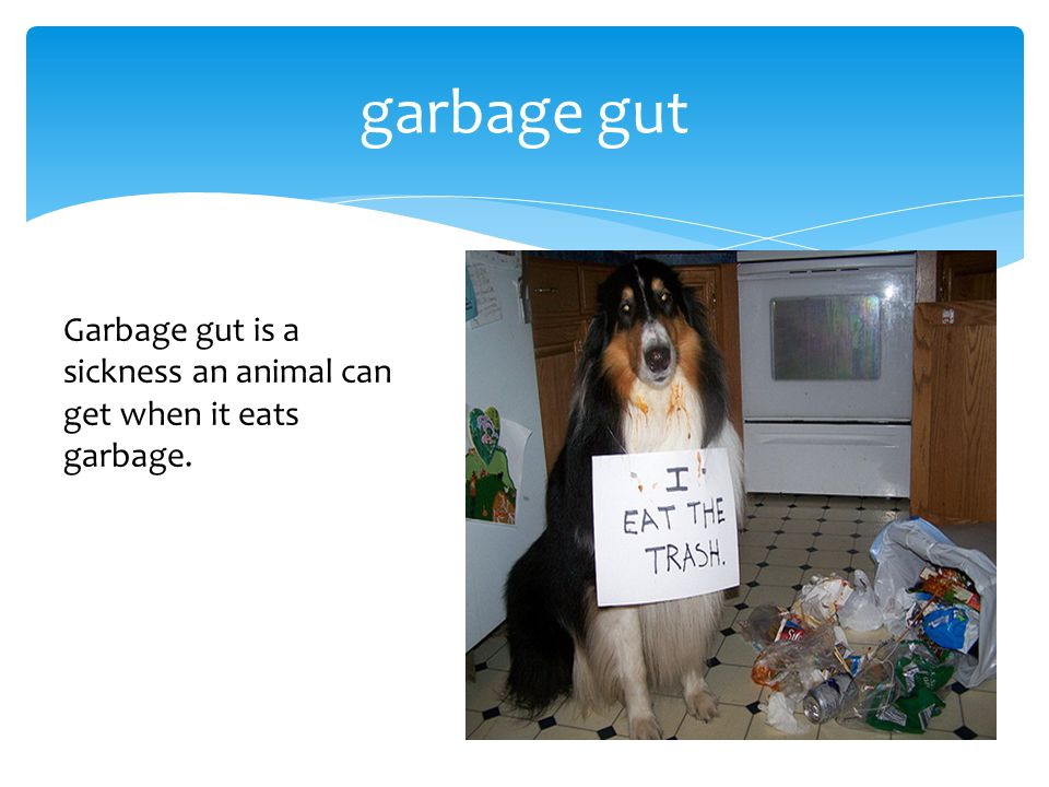 garbage gut Garbage gut is a sickness an animal can get when it eats garbage.