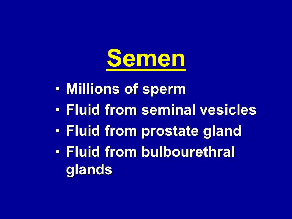 Semen Millions of spermMillions of sperm Fluid from seminal vesiclesFluid from seminal vesicles Fluid from prostate glandFluid from prostate gland Flu