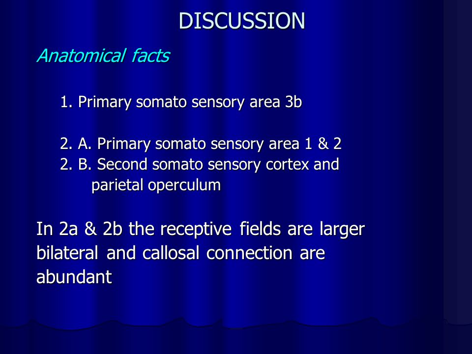 DISCUSSION Anatomical facts 1.Primary somato sensory area 3b 2.