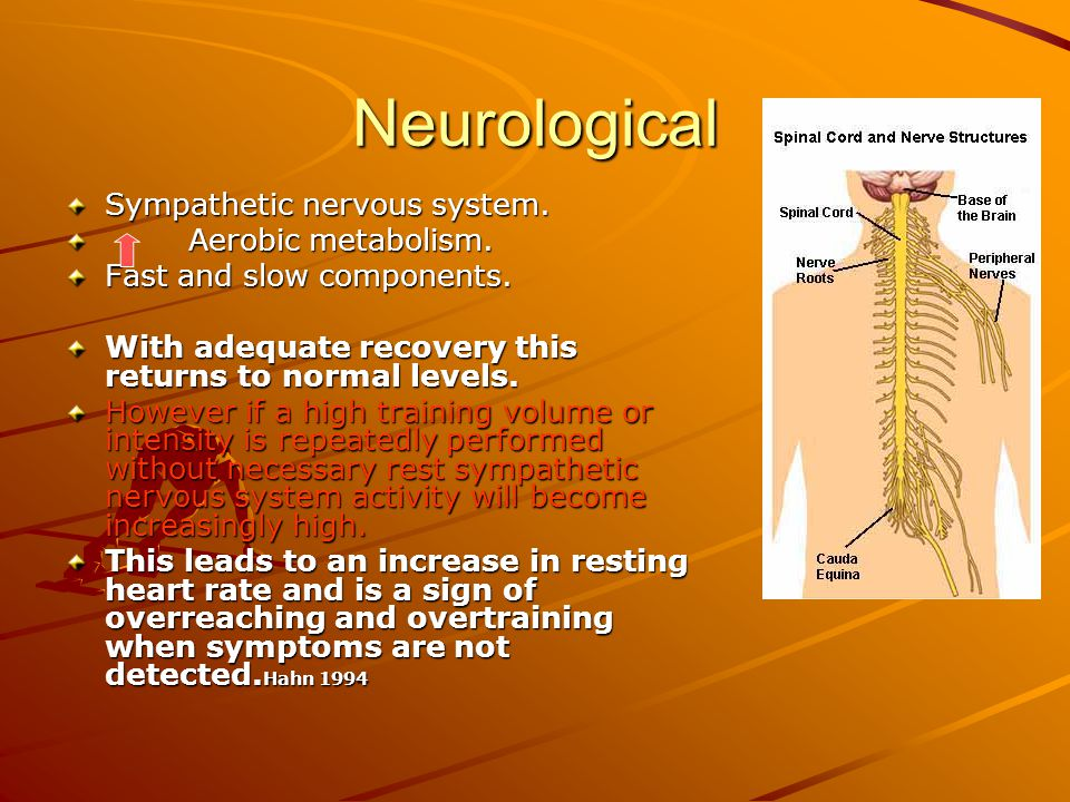 Neurological Sympathetic nervous system. Aerobic metabolism. Aerobic metabolism. Fast and slow components. With adequate recovery this returns to norm