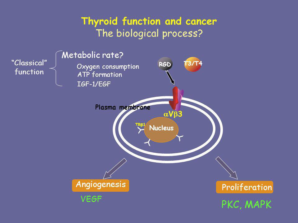 Thyroid function and cancer The biological process? V 3 Plasma membrane Nucleus RGD Proliferation PKC, MAPK Angiogenesis VEGF T3/T4 Metabolic rate? Ox