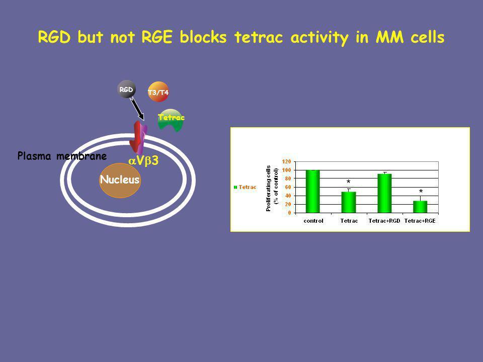 RGD but not RGE blocks tetrac activity in MM cells V 3 Plasma membrane Nucleus T3/T4 RGD Tetrac * *