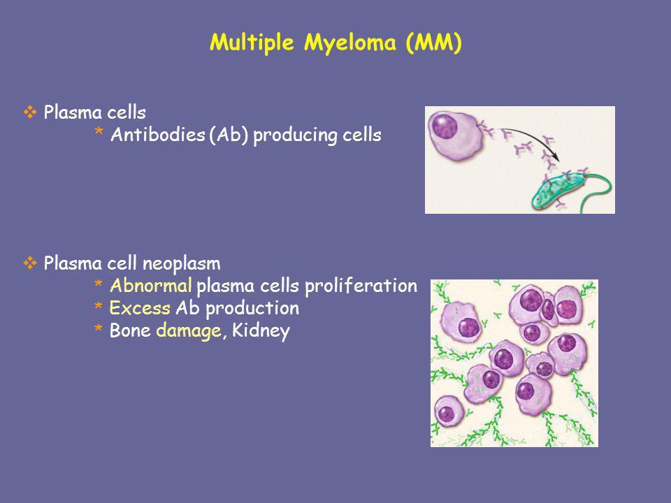 Multiple Myeloma (MM) Plasma cells * Antibodies (Ab) producing cells Plasma cell neoplasm * Abnormal plasma cells proliferation * Excess Ab production