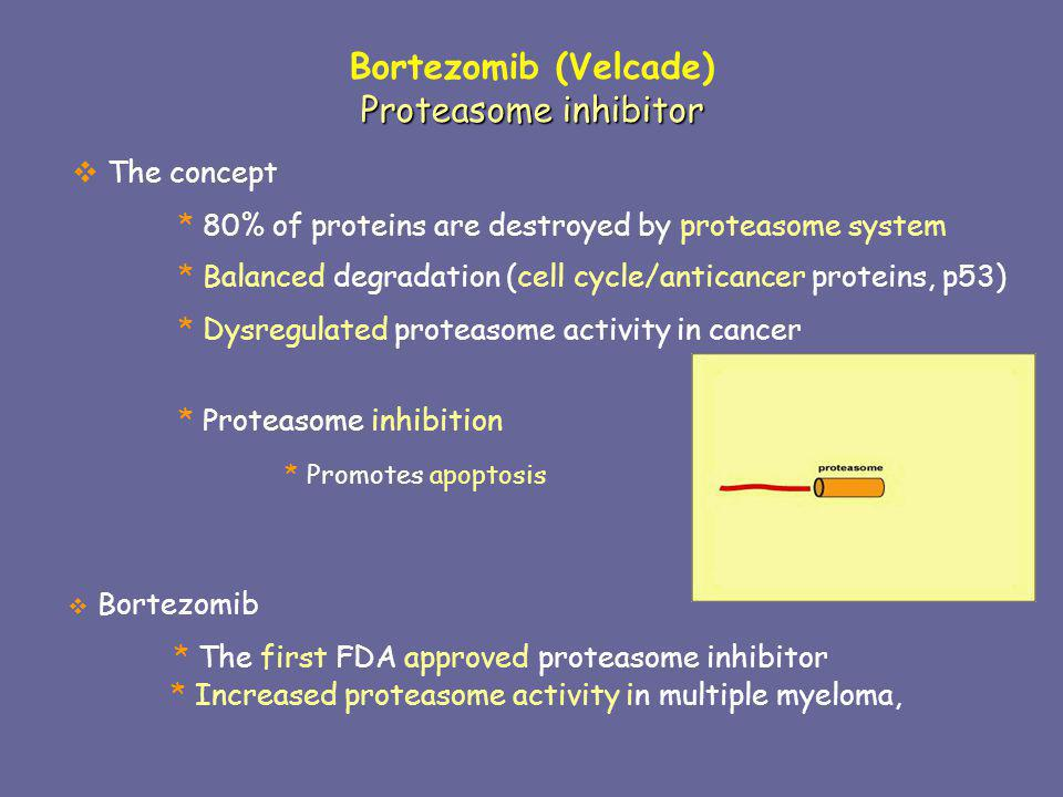 Bortezomib in multuple myeloma Preclinical and clinical trials in myeloma bortezomib * Inhibited proliferation * Enhanced apoptosis * Synergism with chemotherapies Improved outcome The problem * Side effects * Resistance Demand for discovery of new drugs/combination
