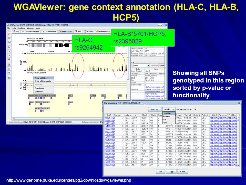 WGAViewer: gene context annotation (HLA-C, HLA-B, HCP5) Showing all SNPs genotyped in this region sorted by p-value or functionality http://www.genome.duke.edu/centers/pg2/downloads/wgaviewer.php HLA-C, rs9264942 HLA-B*5701/HCP5, rs2395029