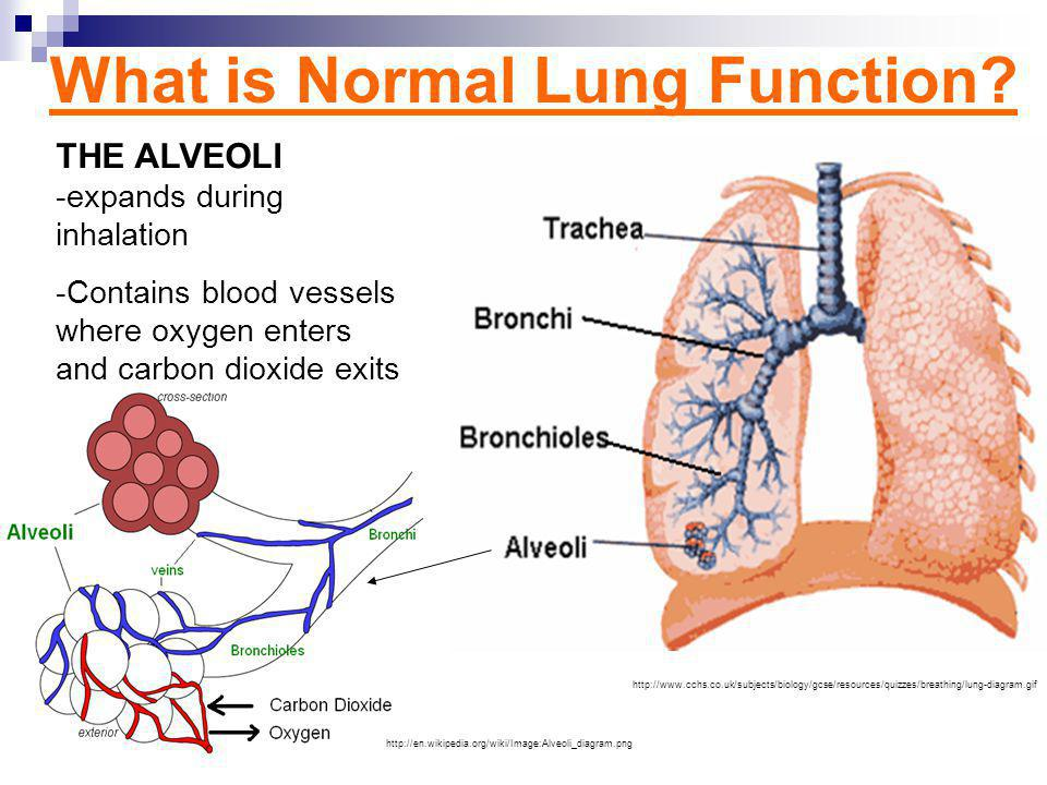 What is Normal Lung Function.
