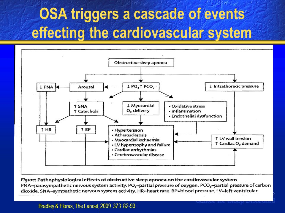 OSA triggers a cascade of events effecting the cardiovascular system Bradley & Floras, The Lancet, 2009. 373: 82-93.
