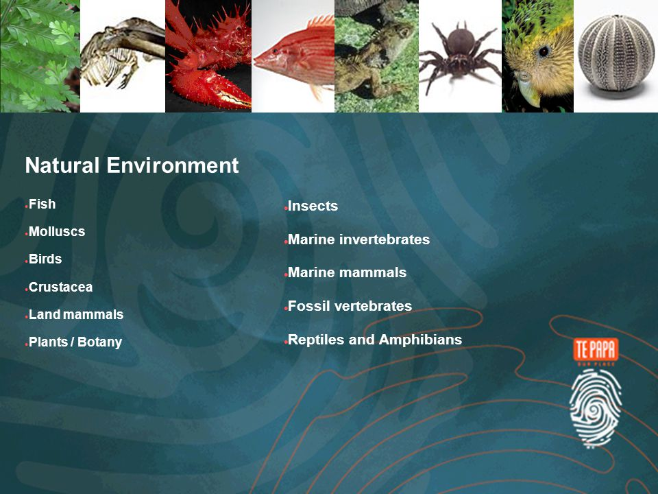 Natural Environment Fish Molluscs Birds Crustacea Land mammals Plants / Botany Insects Marine invertebrates Marine mammals Fossil vertebrates Reptiles and Amphibians