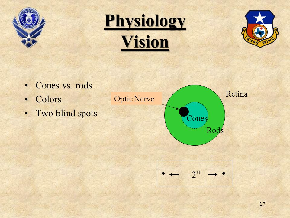 17 Physiology Vision Cones vs. rods Colors Two blind spots 2 Retina Rods Cones Optic Nerve