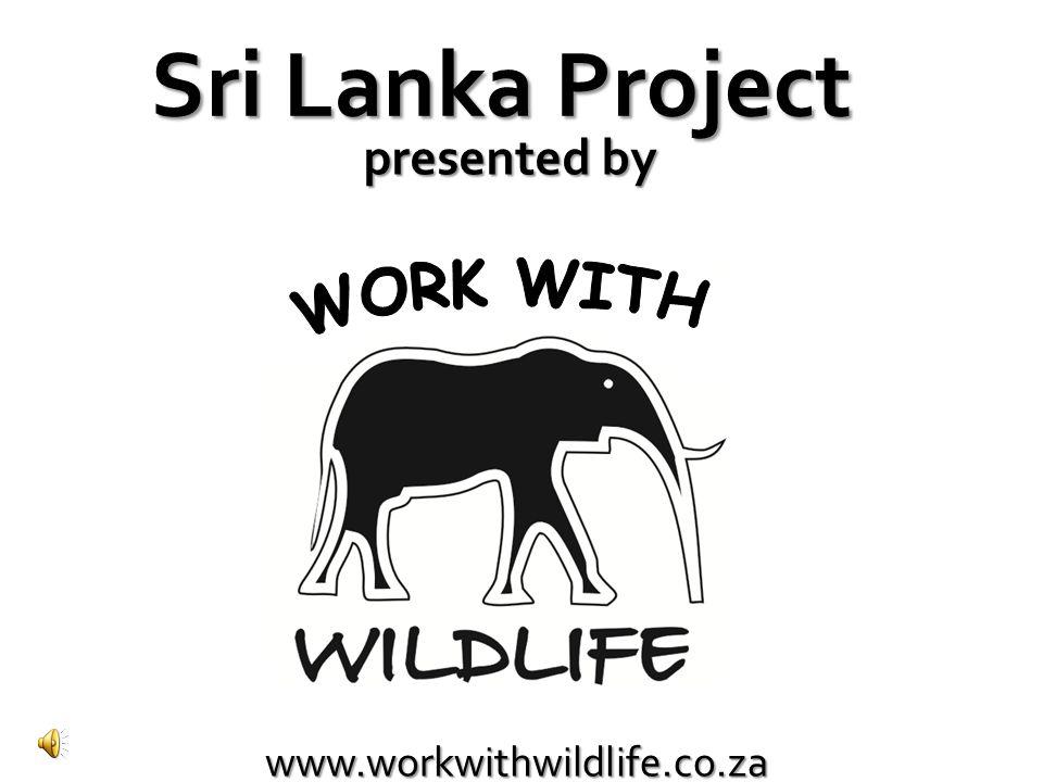 1 1.Colombo (Blue PawTrust Sterilization Project) 2.Negombo (HAAAW Project) 2 We have two projects in Sri Lanka Blue Paw Trust Sterilisation Project - 3 rd /4 th /5 th year students HAAAW project - 1 st /2 nd year students
