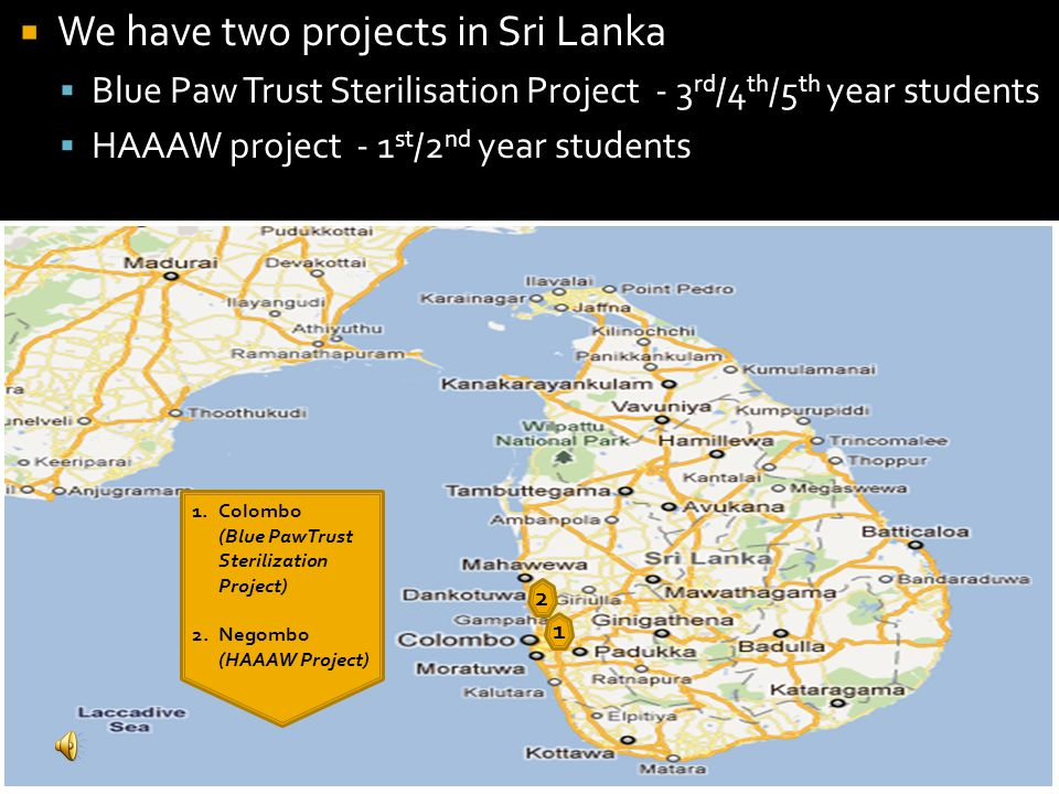 1 1.Colombo (Blue PawTrust Sterilization Project) 2.Negombo (HAAAW Project) 2 We have two projects in Sri Lanka Blue Paw Trust Sterilisation Project -