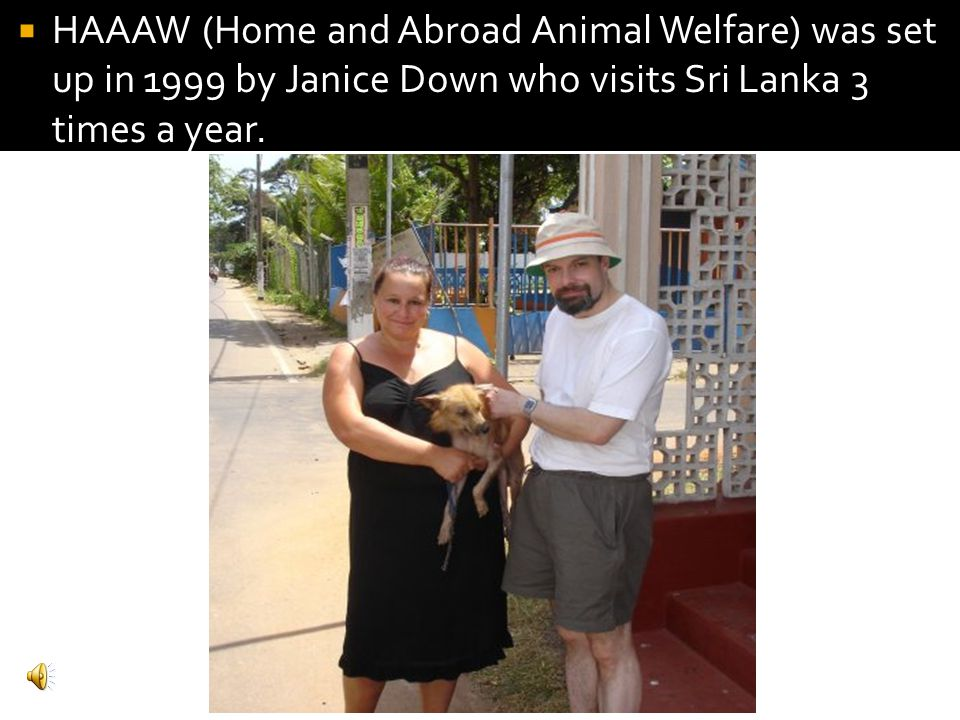 HAAAW (Home and Abroad Animal Welfare) was set up in 1999 by Janice Down who visits Sri Lanka 3 times a year.