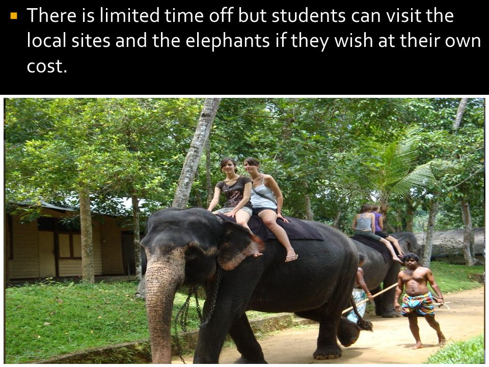 There is limited time off but students can visit the local sites and the elephants if they wish at their own cost.