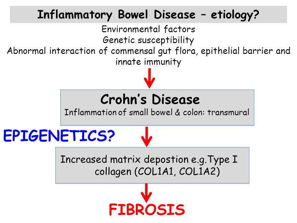 Endothelial cells Mucosal innate immune cells Mesenchymal cells/fibroblasts/myofibrobla sts Epithelium Apoptotic & necrotic epithelial cells GUT LUMEN Gut flora SUBMUCOS A FIBROSIS Intestinal inflammation and fibrosis in IBD Epithelial barrier dysfunction Cytokines, chemokines e.g TNF, IL-8, TGF, IL-1, IL-17 Endogenous signals Cytokines TYPE I COLLAGEN