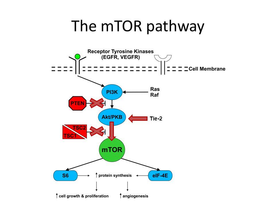 The mTOR pathway Tie-2