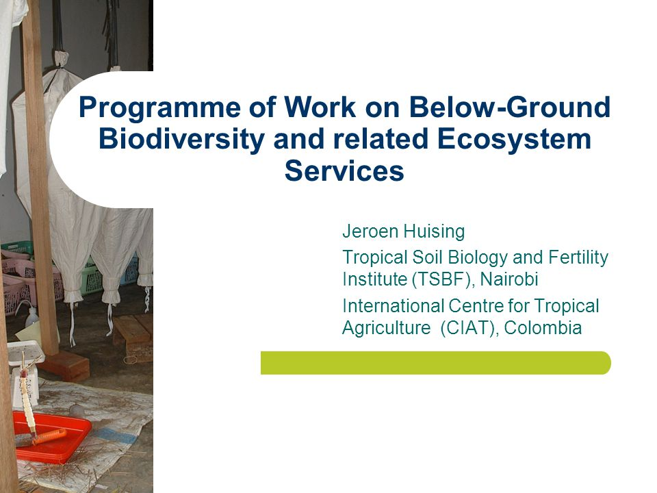 Programme of Work on Below-Ground Biodiversity and related Ecosystem Services Jeroen Huising Tropical Soil Biology and Fertility Institute (TSBF), Nairobi International Centre for Tropical Agriculture (CIAT), Colombia