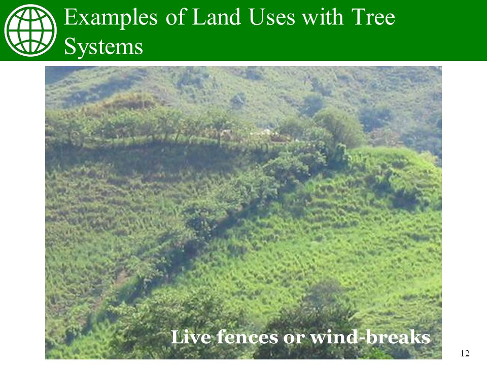 12 Examples of Land Uses with Tree Systems Live fences or wind-breaks