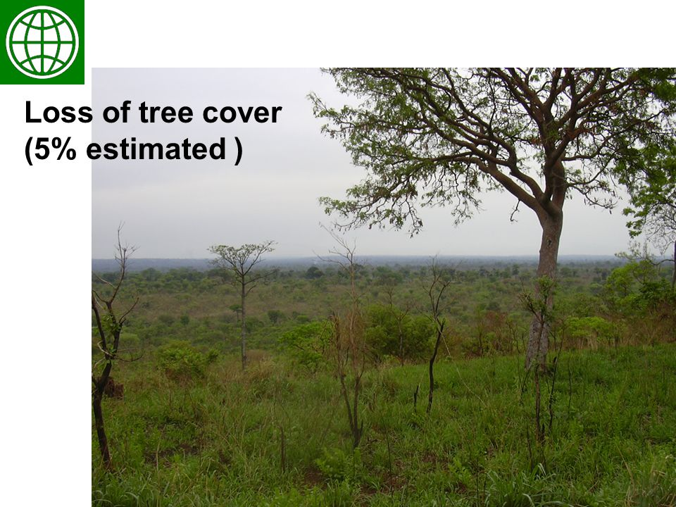 5 Loss of tree cover (5% estimated )