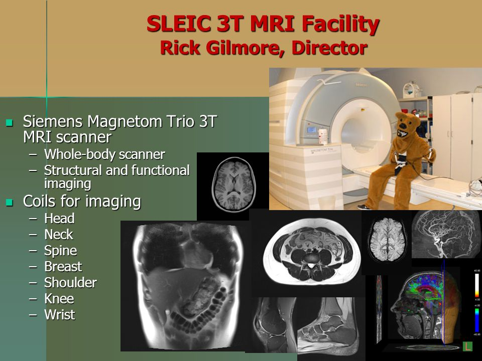 SLEIC 3T MRI Facility Rick Gilmore, Director Siemens Magnetom Trio 3T MRI scanner Siemens Magnetom Trio 3T MRI scanner –Whole-body scanner –Structural and functional imaging Coils for imaging Coils for imaging –Head –Neck –Spine –Breast –Shoulder –Knee –Wrist