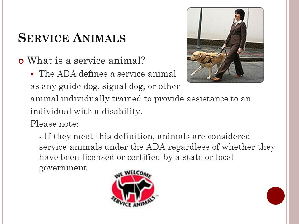 S ERVICE A NIMALS What is a service animal.